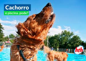 cachorro na piscina - hth