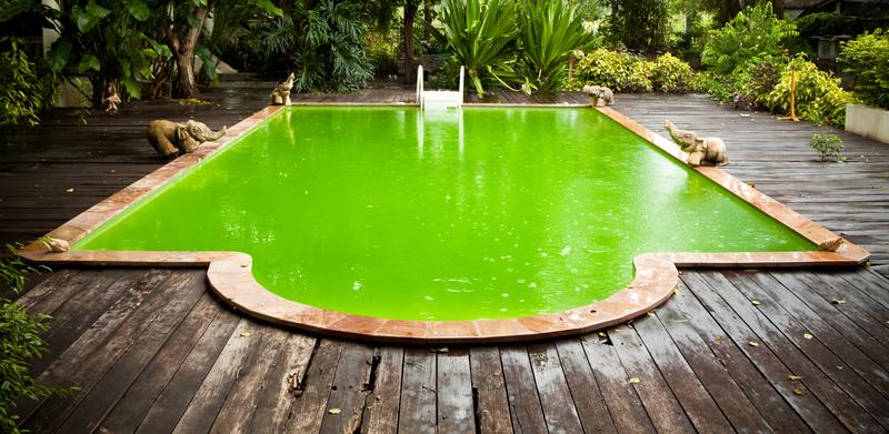 Previnir Algas na Piscina