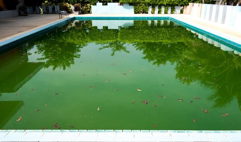 Tipos de algas na água da piscina e como tratá-las hth
